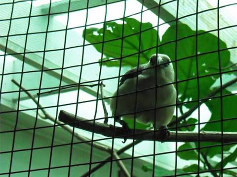 Light Welded Wire Mesh Ideal Housing For Small Animals
